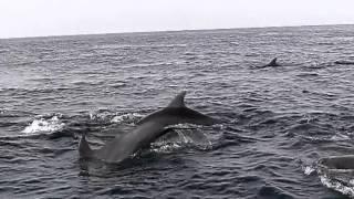 ベートヴェン皇帝第3楽章・WildDolphinswatchingImmortalBeloved