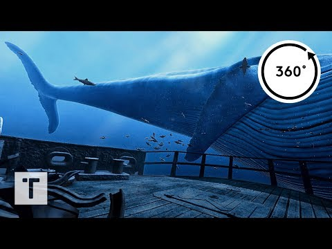 the Blu: Whale Encounter | 3D 360 VR