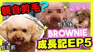 [🐶BROWNIE Growing Diary#5] First time cutting her fur by myself! ⚠️MUFFIN does this to Brownie?
