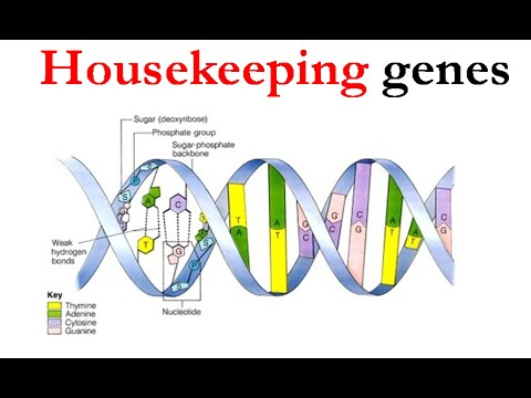 mp4 Housekeeping Gene Example, download Housekeeping Gene Example video klip Housekeeping Gene Example