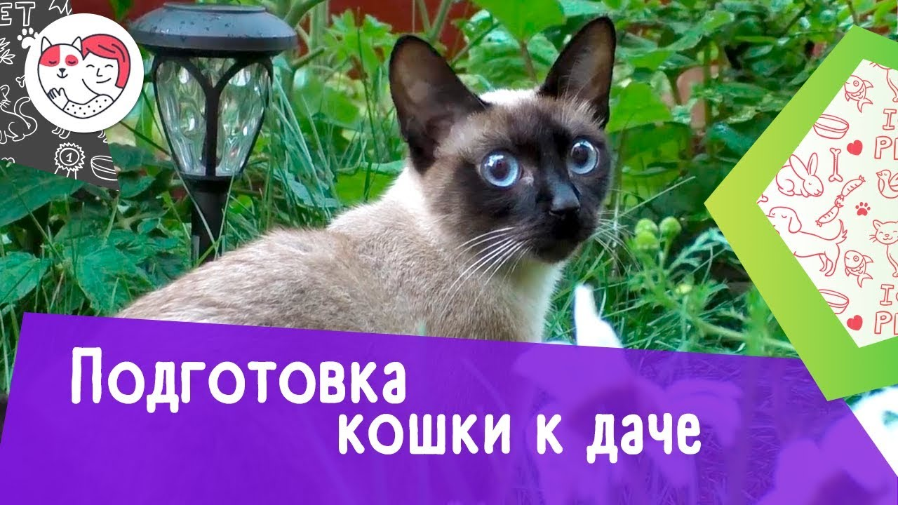 4 правила подготовки кошки к даче