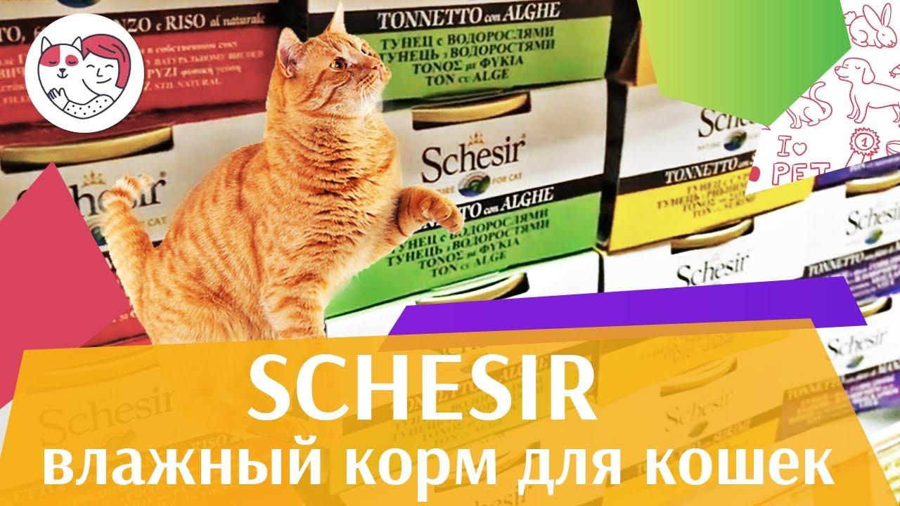 Schesir паучи для кошек на ilikepet