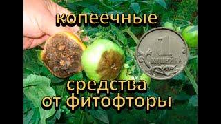 ТОП-3 копеечных средства от фитофторы.