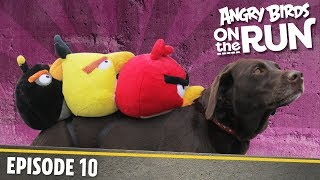 Angry Birds On The Run   Back Seat Buddies    S1 Ep10