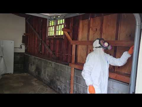 Remediating the Mold in this Garage in Bridgewater, NJ