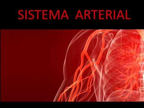 Monitor de Pressão Arterial wa 88