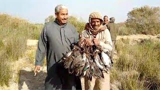 تحميل و مشاهدة انطلاق موسم صيد الطيور المهاجرة بمحافظة الشرقية MP3
