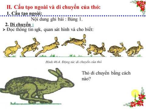 Bài 46 Thỏ