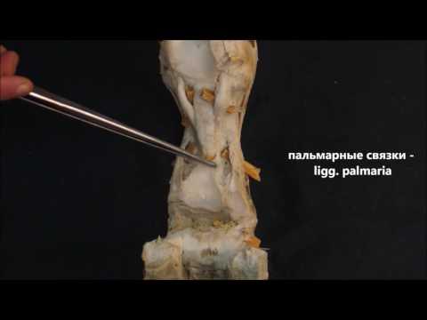 Воспаление при остеохондрозе коленного сустава