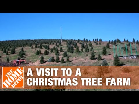 A Visit to a Christmas Tree Farm - The Home Depot