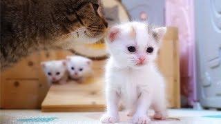 【李喜貓】小猫咪夭折后,猫妈妈的举动让人看了心碎