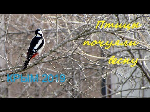 Песни птиц весной, Крым 2019, Судак, Дачное. Март во дворе нашего дома