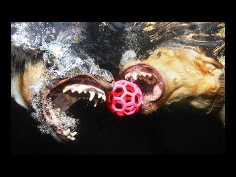 Obogatio se slikajući pse pod vodom!