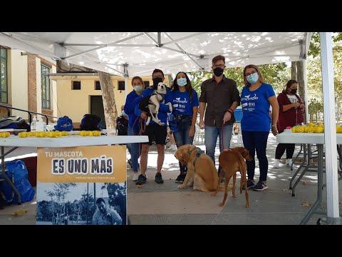 Entre Patas, campaña en defensa del bienestar de tus mascotas. Campillos