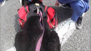 愛犬との防災・避難訓練。