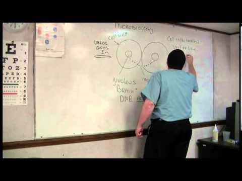 Basic Microbiology for Sterile Processing - YouTube