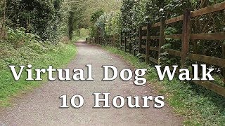TV for Dogs : Virtual Dog Walk in The Woods - Dog Watch TV ✅