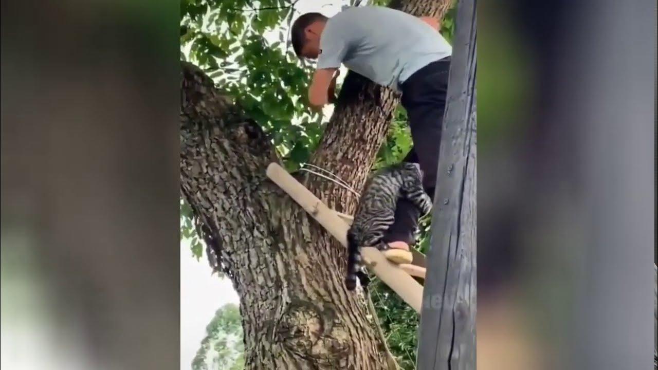 Я не трус, но я боюсь: кот показал мастер-класс по спуску с дерева фото