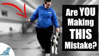 5 Reasons Your Leash Walking Training Isn't Working - Professional Dog Training Tips