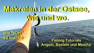 Makrelen in der Ostsee, wie und wo vom Boot