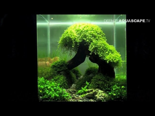 Aquascaping - The Art of the Planted Aquarium 2012 Nano compilation