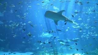 Worlds Largest Aquarium 3 Georgia Video