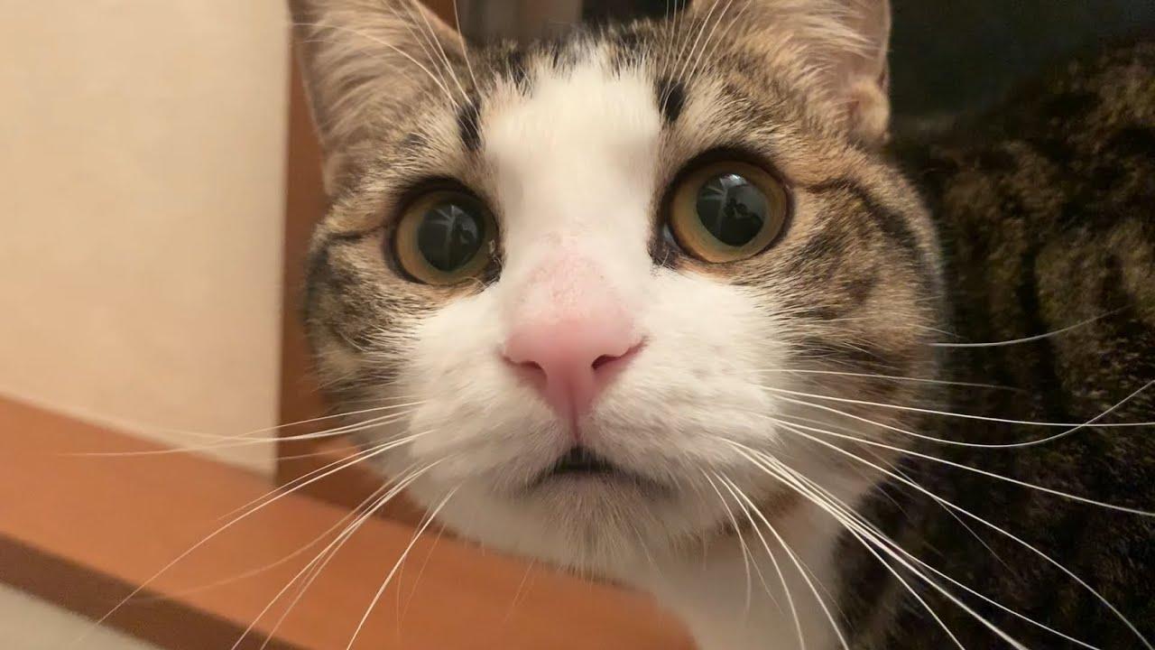 何かを探している顔がかわいい猫