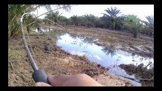 Casting Ikan Haruan (snakehead fishing) Guna Reel spinning Rod bc