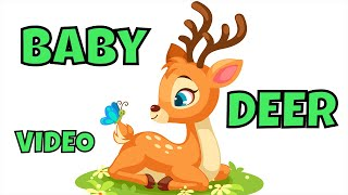 CUTE BABY DEER. pet 2020 fpv funny animal cute deer baby animals cute animals doe cute animal nature
