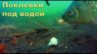 Карась ловля на удочку под водой