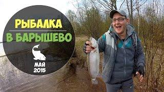 Барышево рыбалка с берега