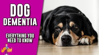 Canine Cognitive Dysfunction Supplements Free Video Search Site