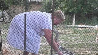 Бабушка Катя против гуся