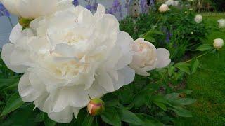 Best Perennials For A Cut Flower Garden // Northlawn Flower Farm