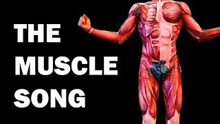 THE MUSCLES SONG (Learn in 3 Minutes!)