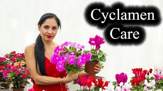 Cyclamen Plant Care   Indoor Growing Conditions   Tips