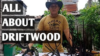 ALL ABOUT DRIFTWOOD