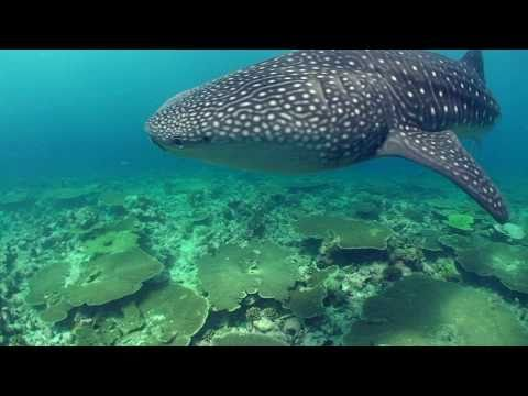 Vilamendhoo, Vilamendhoo,Malediven
