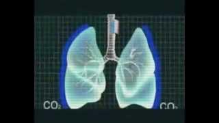5 тайн дыхания Смотрим!1
