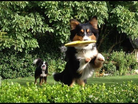 Welche Hundefrisbee ist empfehlenswert? Testbericht und meine Erfahrungen