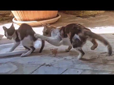 Che alimentare un gattino a un verme con