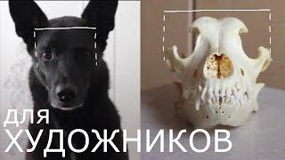 Анатомия головы собаки