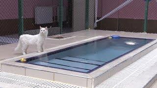 Gambar cover Van kedileri için
