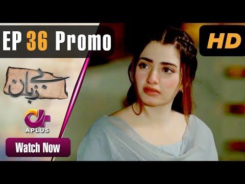 Pakistani Drama | Bezuban - Episode 36 Promo | Aplus Dramas | Usama Khan, Nawal Saeed, Mahlaqa