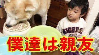 秋田犬と孫の響の毎日の朝の出来事