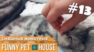СМЕШНЫЕ ЖИВОТНЫЕ И ПИТОМЦЫ #13 СЕНТЯБРЬ 2018 [Funny Pet House] Смешные животные