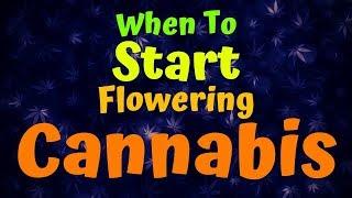 When To Start Flowering Cannabis