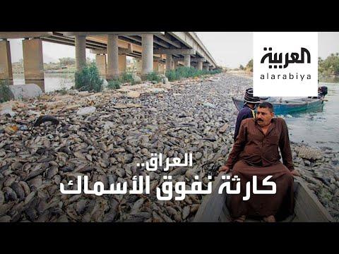 العرب اليوم - شاهد: أطنان من الأسماك نافقة في العراق.. والسبب لا يزال مجهولا!