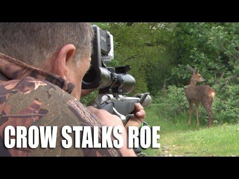 Crow Stalks Roe