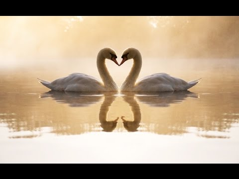 爱我的人和我爱的人 Love Me and the Person I Love ▶ Beautiful Chinese Romantic Song